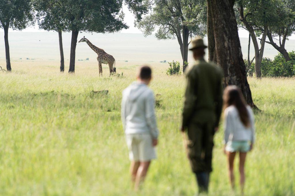 Besucher und Gäste der Governors' Camps erwarten im Masai Mara Game Reserve in Kenia eine einzigartige Wanderung: Was sonst nur aus einem Fahrzeug heraus sichtbar wird, erschließen die geführten Walking Safaris in einem an das Masai Mara Wildreservat angrenzendem Gebiet zu Fuß.