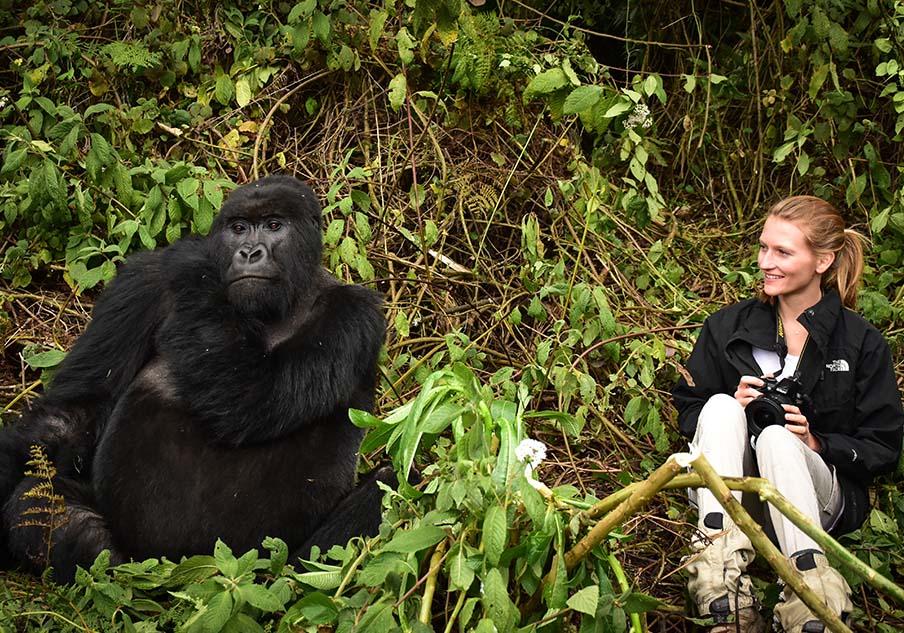 Ruanda gilt als einer der weltweit besten Orte, um majestätische Berggorillas in ihrem natürlichen Lebensraum zu beobachten. Ein geeigneter Ausgangspunkt für Gorilla-Trekkings ist die Sabyinyo Silverback Lodge der Governors´Camp Collection, die sich in unmittelbarer Nähe des Volcanoes-Nationalparks befindet.