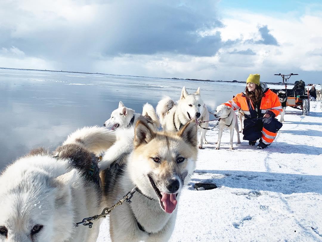 Wer auf der Suche nach einer außergewöhnlichen Art ist, die Insel aus Feuer und Eis kennenzulernen, wählt eine Tour mit einem Hundeschlitten.
