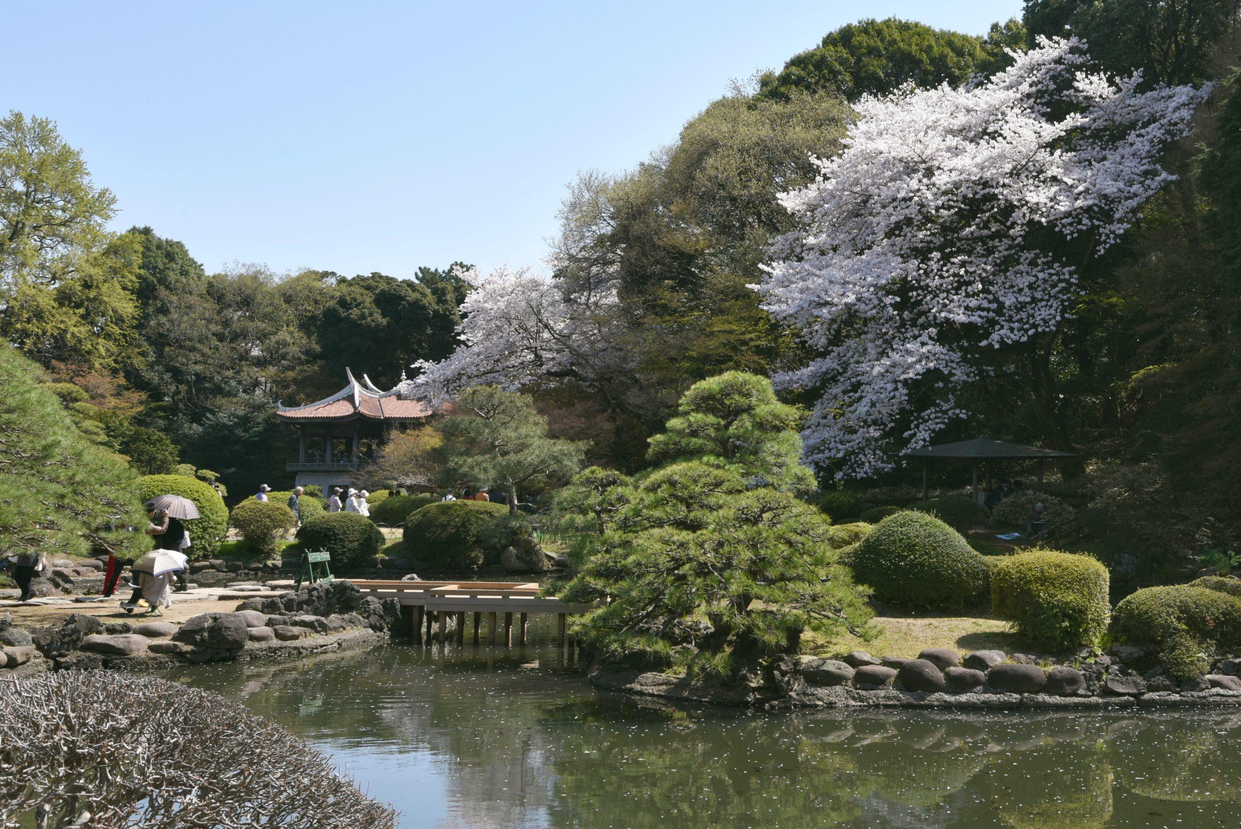 Besonders im Frühling ist der Shinjuku Gyoen einer der meistbesuchten Gärten Tokios. Dann tauchen die mehr als 1.500 Kirschbäume den Nationalgarten in ein Meer aus Rosatönen