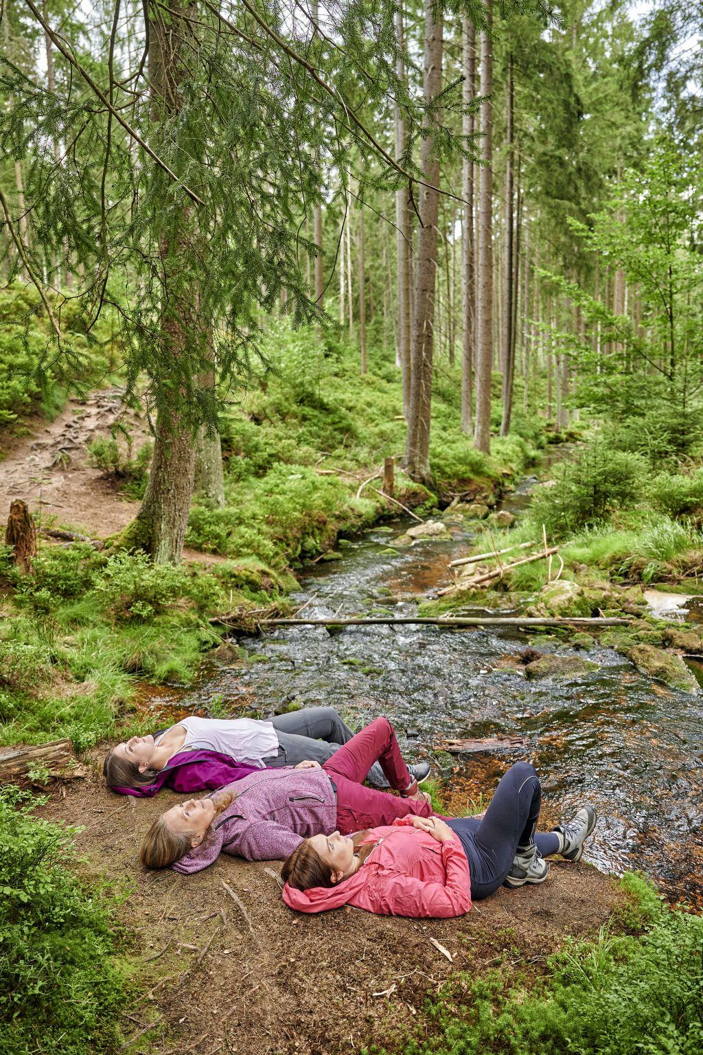 Im Fichtelgebirge entwickelt sich der Wald immer mehr zum Wohlfühlort und gewinnt als natürliches Heilmittel an Bedeutung.