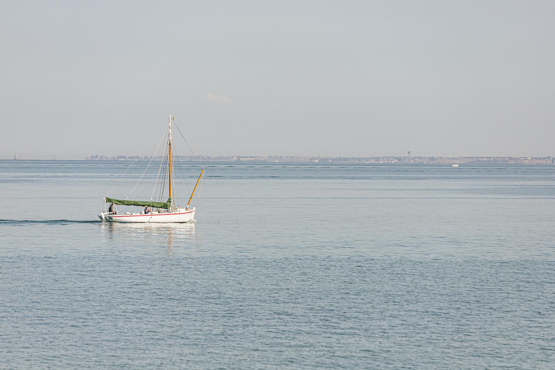 Ökologisch und gesund: Seetang aus dem Atlantik